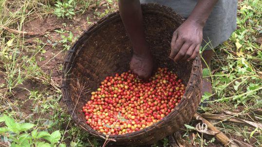 Ethiopia-2017-Ecosia (149 of 279)
