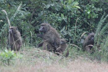Ethiopia-2017-Ecosia (156 of 279)