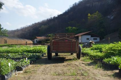 Instituto Tierra Tree Planting - 1