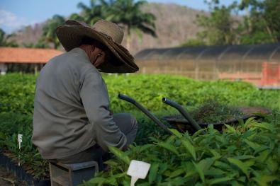 Instituto Tierra Tree Planting 2 - 1