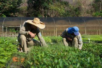 Instituto Tierra Tree Planting 3 - 1