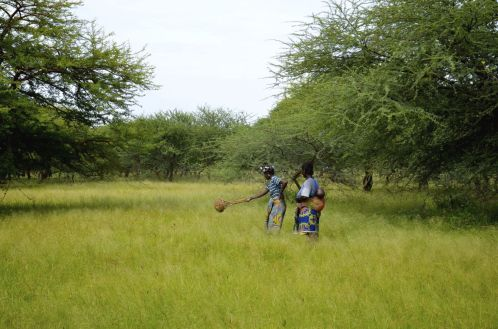 Local women collecting seeds _ Frauen sammeln Samen fuer naechste Aussaat Credit Beeldkas and OZG_preview