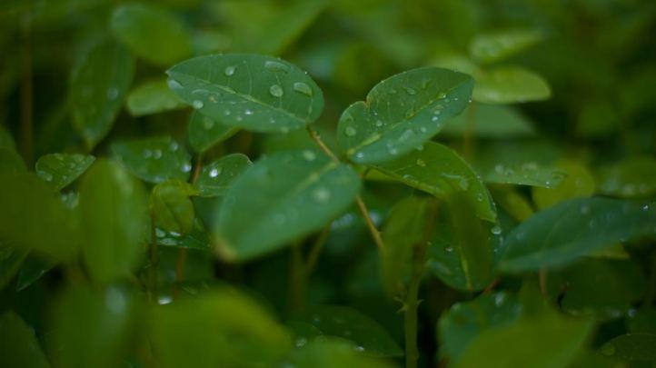 Plant in nursery (ITPA) - 1
