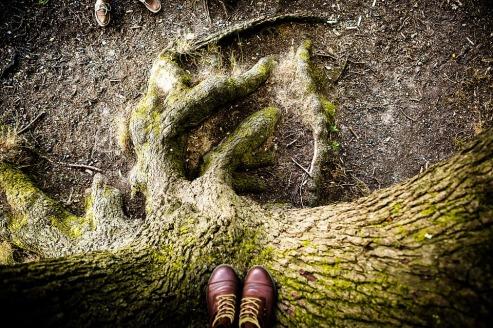 tree-1320990_960_720