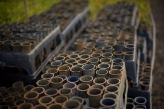 Tubes for trees in nurseries, ITPA (PACTO) - 1